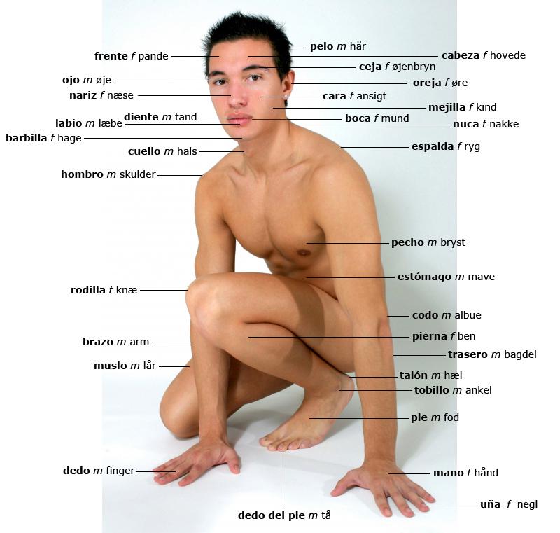 kroppen på spansk